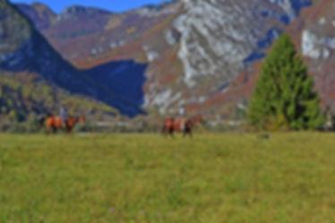 Ranch Horse's Soul Trekking Dolomiti Friulane