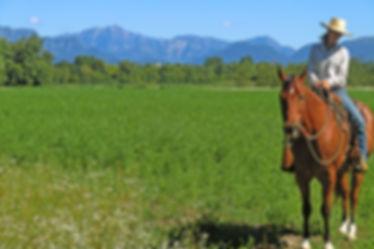 Ranch Horse's Soul Escursioni Cavallo Magredi
