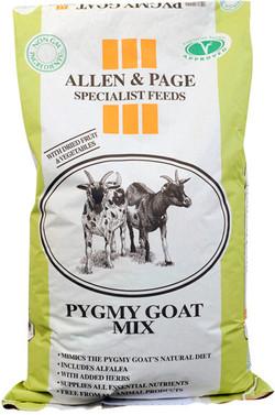 p-2264-pygmy_goat_mix-1