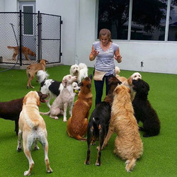 _And here we have a dog trainer in her n