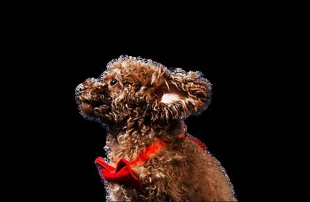 Richmond Dog Trainer Shelley Testimonials
