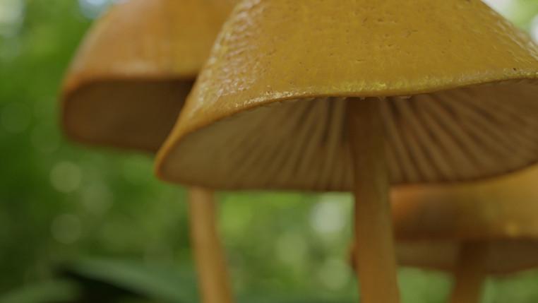 Limitless Creations Mushroom Cluster Scene