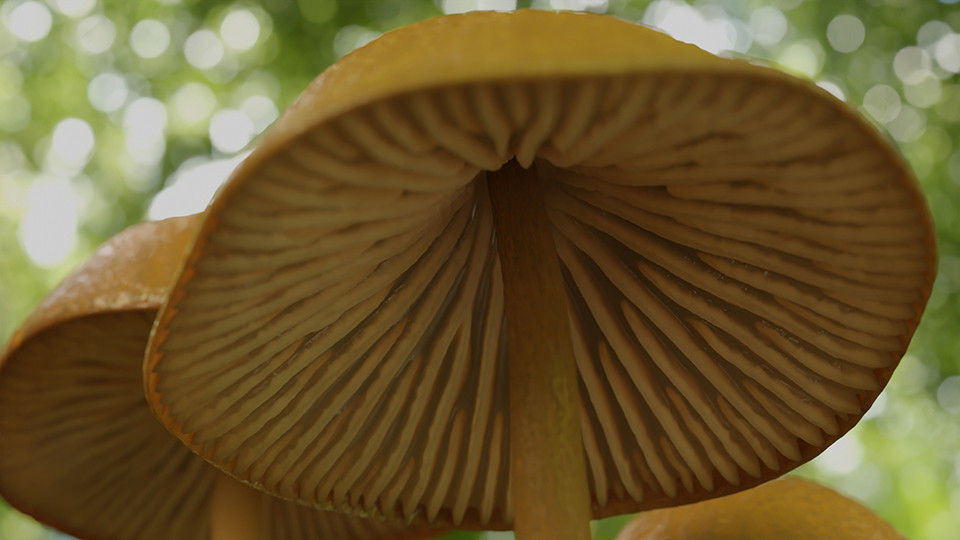 Digital ilustration of the underside of a mushroom