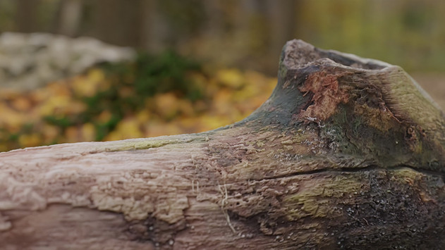 Limitless Creations 3D Scanned Rotting Log