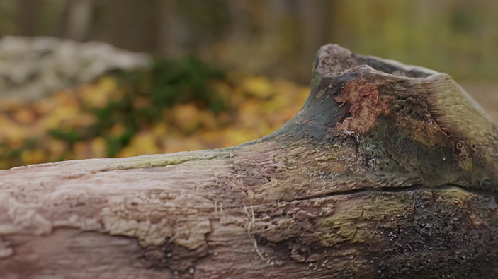 3D Scanned illustration of a rotten log by Limitless Creations, Essex