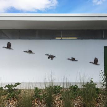 Kawau in Flight - Western Reserve Public Toilets, Orewa