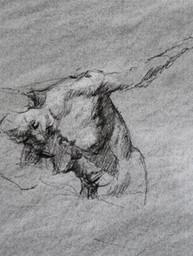 Rapid sketch