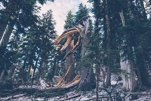 黑沉香 (Black Agarwood) - 10ml