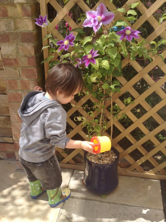Growing Your Own Fruit and Vegetables to Educate your Baby-Led Toddler: Basic Tips for Gardening Nov