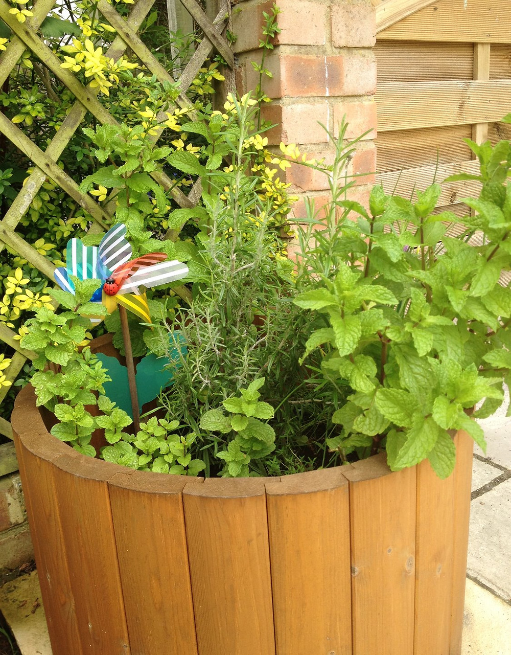 Herb Trough - Baby-Led Weaning for Busy Parents (BLW)