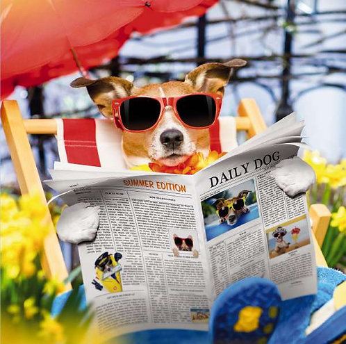 Daily Dog Blank Card