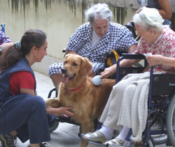 pettherapy_02