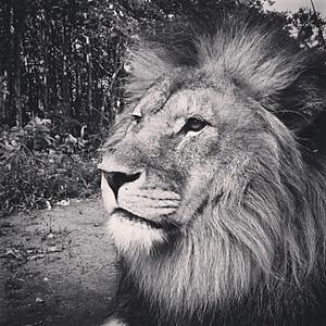 Simba - Our Inspiration