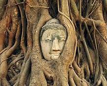 La cabeza de budha en el árbol sagrado en Ayutthaya