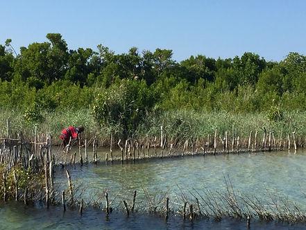 ancient fishing traps, Kosi