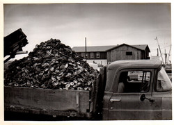 Truck bed of oyster shell 1976