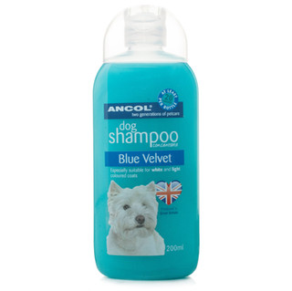 Shampoo Blue Velvet