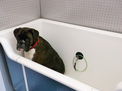 Molly in the bath with lots of room