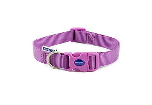 Plain Purple Collar.jpg