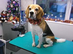 19.12.15 Benson Beagle 1.JPG