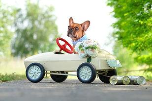 dog-373280.jpg