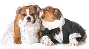 dog-wedding-blog.jpg