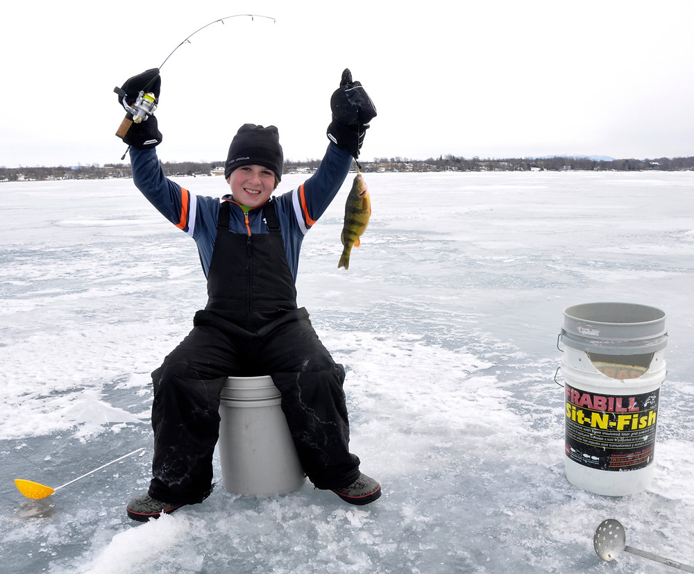 Boy pulls yellow perch from the ice