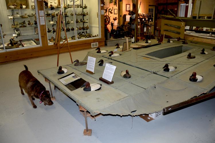 Upper Bay Museum - Single Sinkbox - outlawed 1935