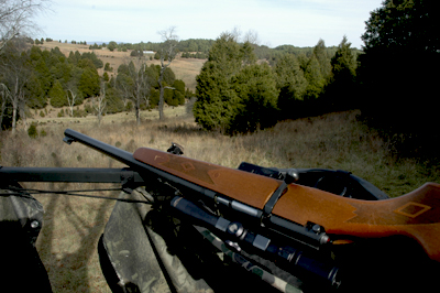 View from the Hunting Stand-GREAT