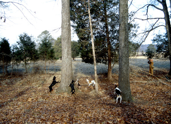 squirrel hunting with dogs-Outdoors Ramb