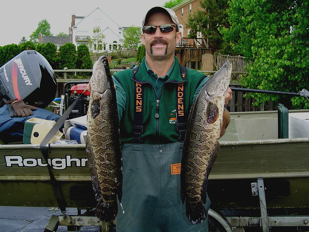 northern snakehead fisheries management