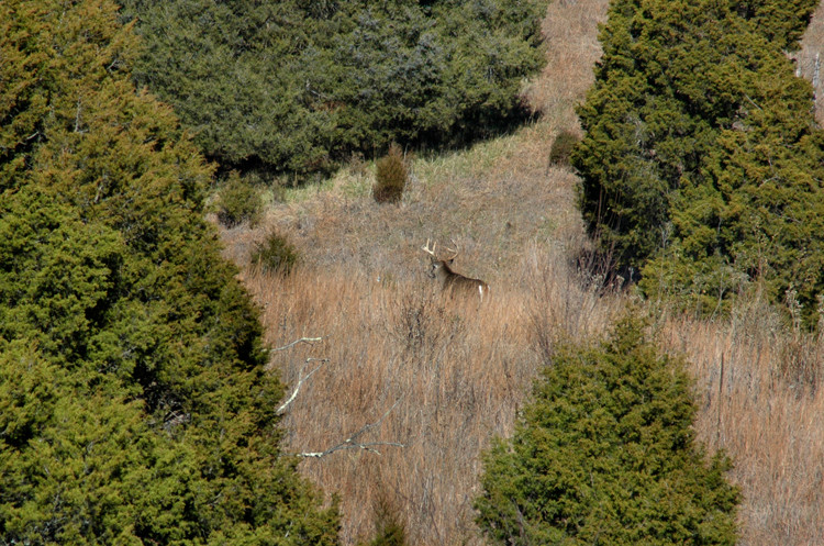 treestand safety deer hunting