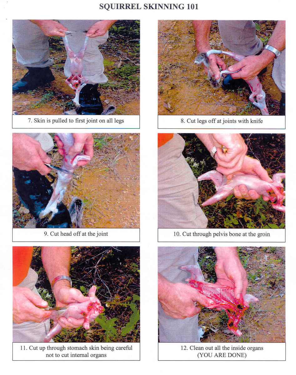 Squirrel skinning technique - page 2 - O