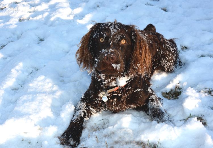 Jamey likes snow-OR