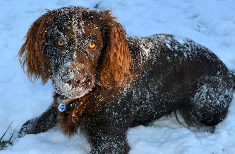 Jamey likes snow-Outdoors Rambler