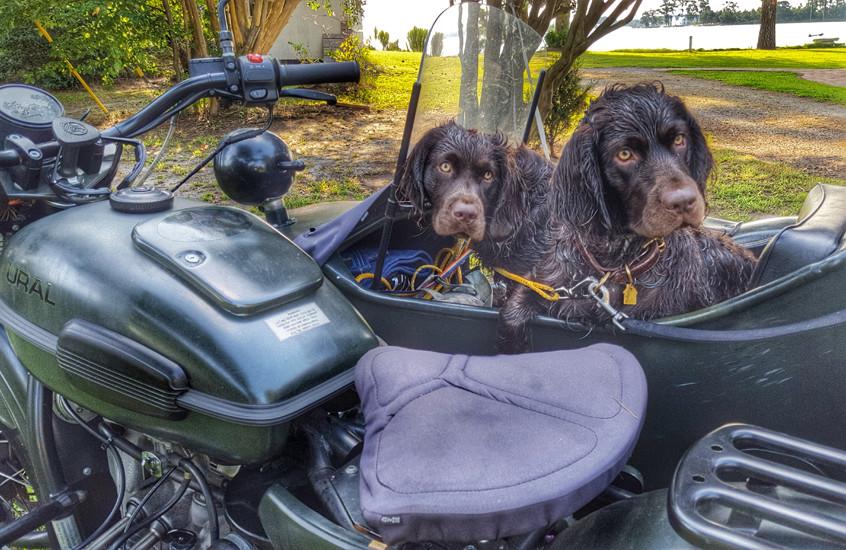 Harley wants to drive - Noooo