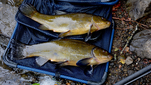 Tackling Tench! Fishing With Paddy Murphy in County Cavan during Visit to Ancestral Land