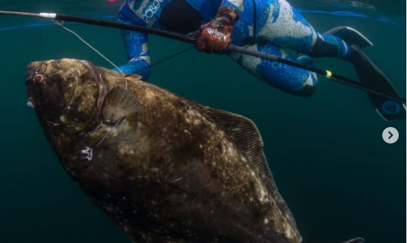 Florida Woman Notches World Record Halibut, Spearfishing the Beast in an Alaskan Kelp Forest