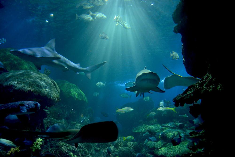 Tennessee aquarium Chattanooga