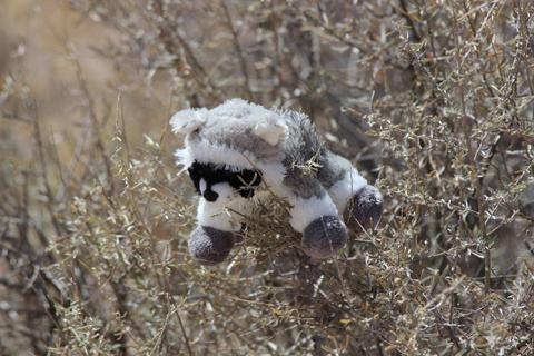 FLIR - stuffed raccoon on ice