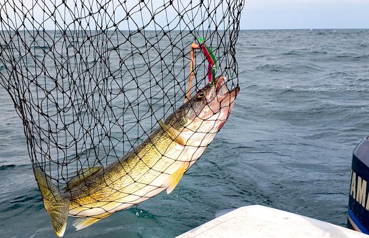 fish caught on harness