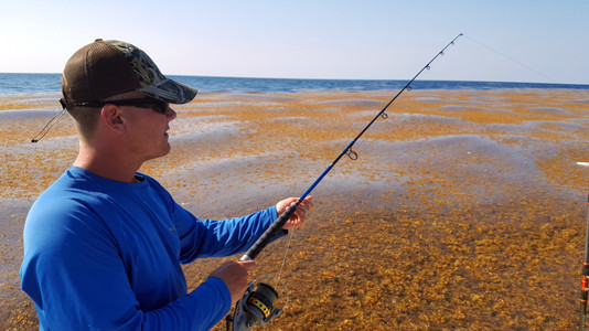 Nick Mitcheltree fishes along an incredible carpet of Sargasso grass in the Gulf Stream-Ken Perrotte photo