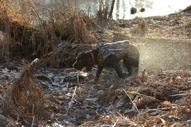 January 2018 duck retrieve - OR - Perrotte photo5