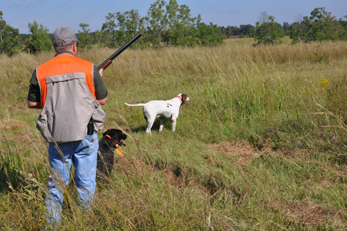 Covey Rise Bird Hunt - Outdoors Rambler