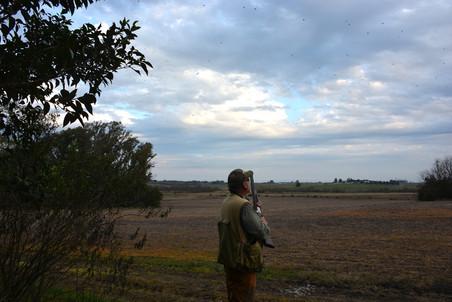 Uruguay - birds, birds, birds