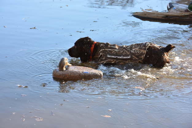 January 2018 duck retrieve - OR - Perrotte photo2