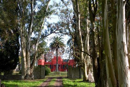 Uruguay Lodge - century-old eucalyptus