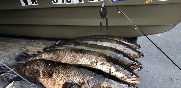 Northern Snakehead Impacts on Fisheries: Biologists Reaching Differing Conclusions