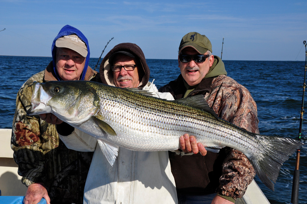 striped bass management