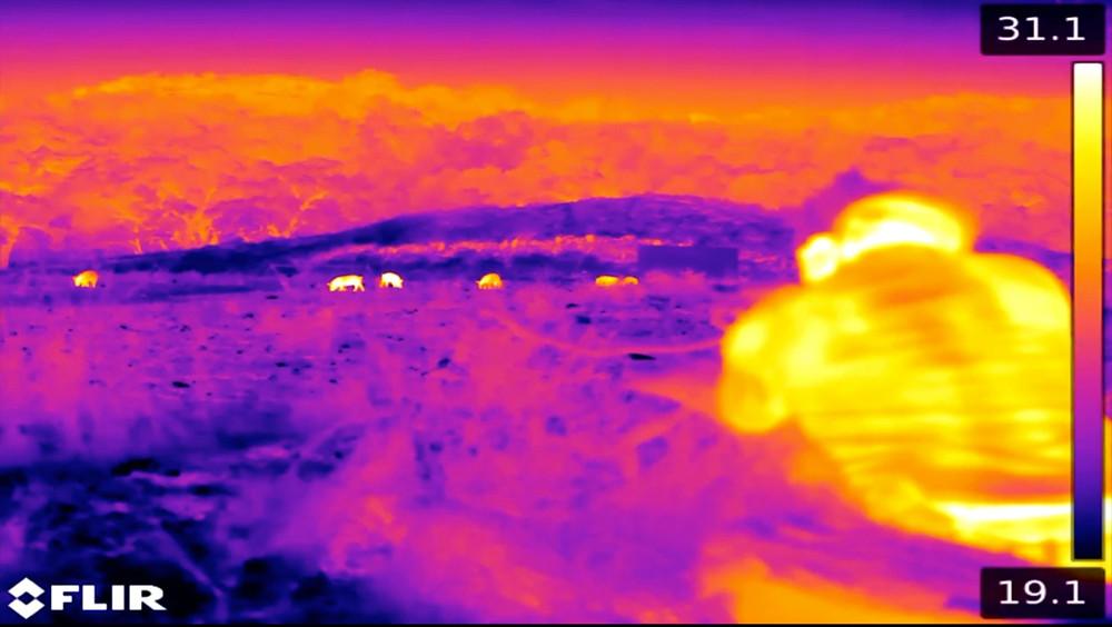 FLIR Thermal Image